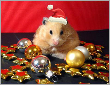 5-christmas-animals-1-1