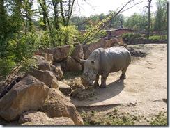 2005.05.18-019 rhinocéros