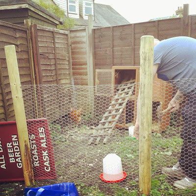 How to get started keeping Chickens