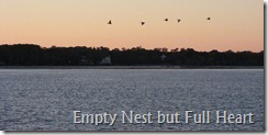 Pelicans in flight at sunset HHI Dec. 2008-001