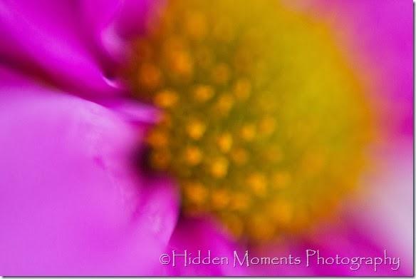 Macro daisy 2