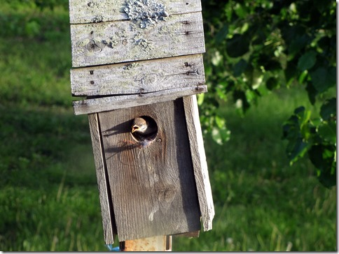 Birdmotel05-13-13a