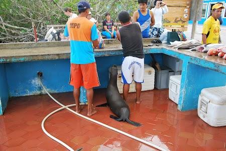 Imagini Galapagos: foca la masa in Puerto Ayora