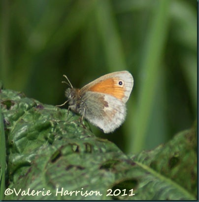 22-small-heath