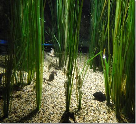 aquarium 206