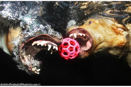 caes subaquaticos desbaratinando  (15)