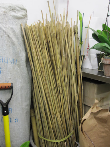 Bamboo can be found in the back of the store.
