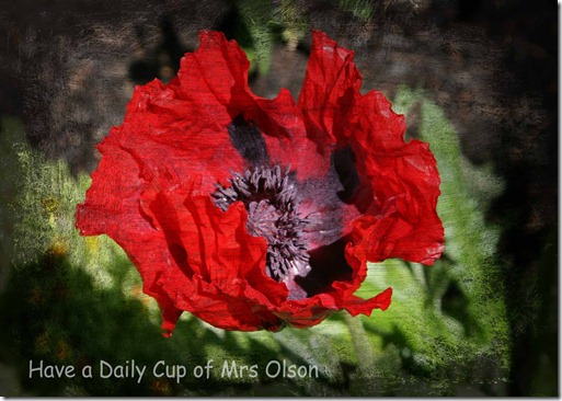 smucged red poppy