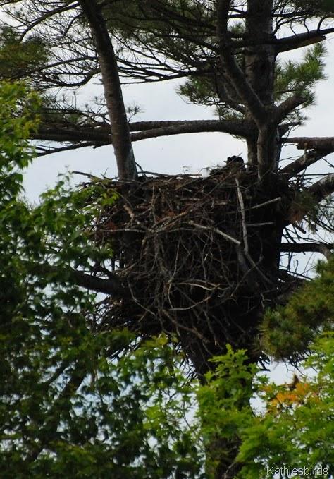 4. eagle's nest-kab