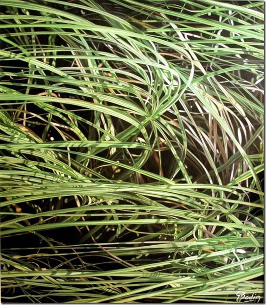herbes VII