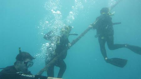 Imagini Cairns: Acomodarea sub apa la marea bariera de corali ...