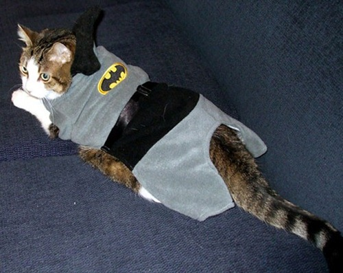 Gatos_caes_Batman03