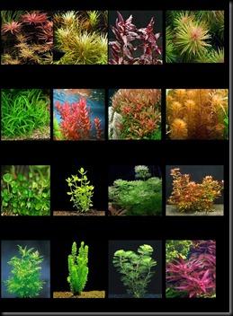Catalogo plantas 2