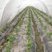 Warraichagrifarms.com-Tunel-Farming46.JPG