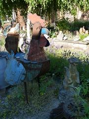 garden june 2011 011