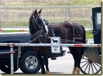Amish Buggy (2)