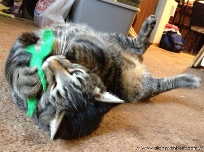 DIY: Geeky Cat Toys | allonsykimberly.com