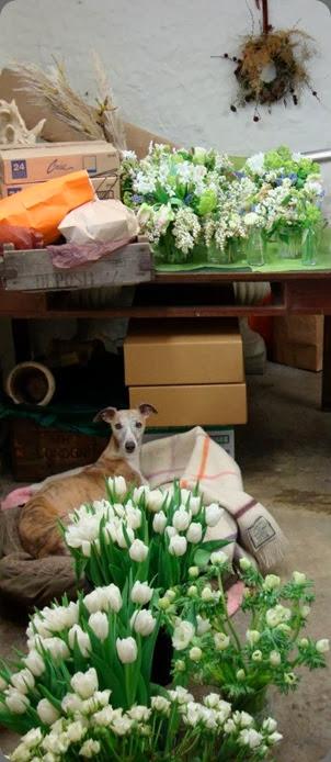 pet of shop 486350_153324734832484_507878809_n amanda taffinder flowers