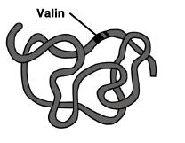 asam amino zona biologi kita