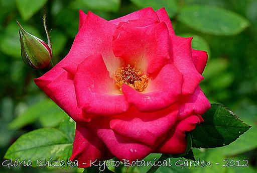 Glória Ishizaka -   Kyoto Botanical Garden 2012 - 137