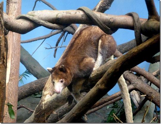 Woodland Park Zoo 14