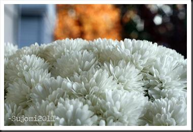 2011 11 10 _MG_6697w