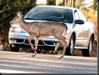 deer-deterrent-e1354121131791