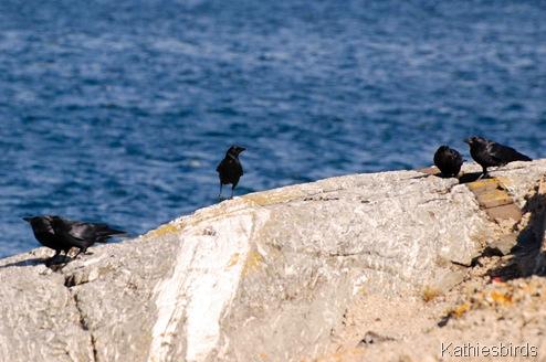 4. Crows-kab
