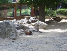 2013.08.04-020 kangourous géants