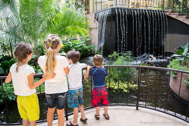 Callaway Gardens butterfly garden blog-10