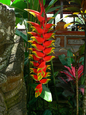 Bali photo: Banana tree flower