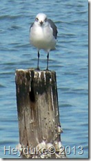 2013-01-21 Rockport Port A 029