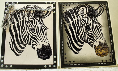 Gentle Zebra 2013  b
