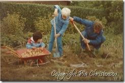 Opgravning af kartofler 1984