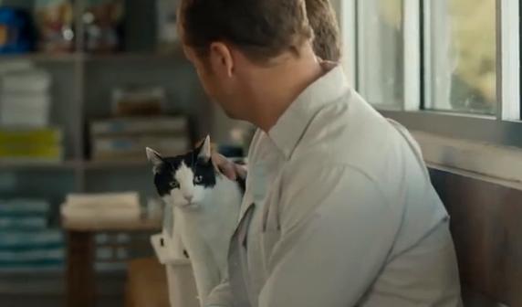 Cat chow publicidad