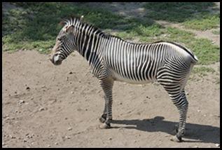 Zoo5 027