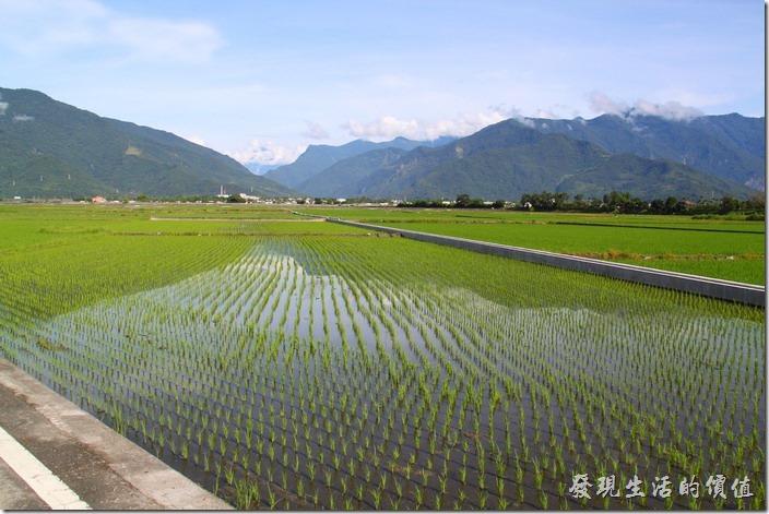 台東縣池上鄉稻田中山巒的倒影。蓊翠的稻秧正式孕育出池上鄉優質好米的地方。
