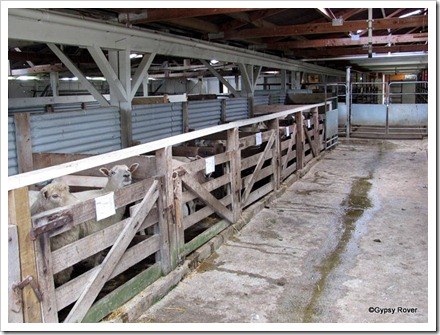 Sheep pens at the Clareville stock market.