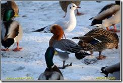 Bradgate Park D7000  11-02-2012 15-41-029