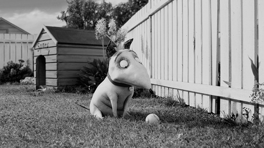 """FRANKENWEENIE""..In Tim Burton?s ?Frankenweenie,? Sparky, a playful and curious bull terrier, is enthusiastically devoted to his young owner, Victor.  Presented by Walt Disney Pictures, ?Frankenweenie? opens nationwide in 3D on October 5, 2012...Film Frame..© Disney Enterprises, Inc.  All Rights Reserved..."
