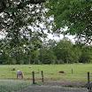 Paarden en schapen - www.LandgoedDeKniep.nl