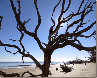 ga_eoy_jekyll_driftwood_beach_6