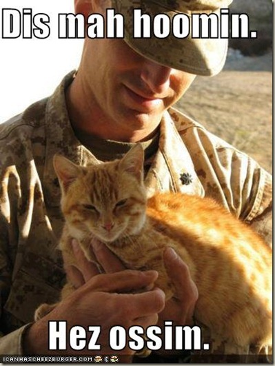 funny-pictures-orange-cat-loves-soldier