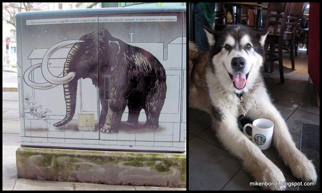 mammoth & mammothmute
