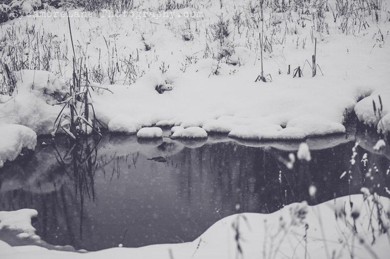 SycamoreLane Photography-124