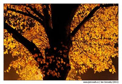 Hřbitovní strom dušičkový