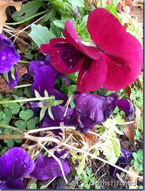 garden v