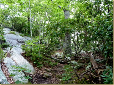 2012-08-02 - Blue Ridge Parkway  - MP 120 - 46 (31)