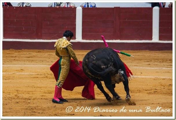 Toros 2014 (2)-13