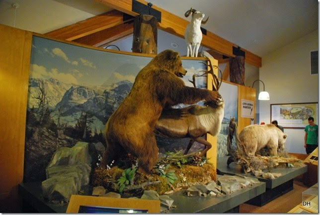 08-06-14 Grizzly and Wolf Discovery Center (403)